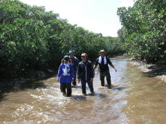 Fieldworks in mangroves