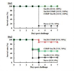 図1. 志賀毒素産生性大腸菌に対するトキソイドワクチン開発