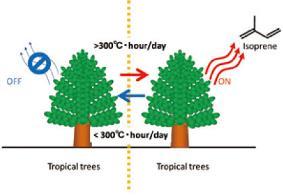 熱帯樹木は暑さに耐えるためのイソプレンというガスの放出を一定温度を境にして効率よく制御している